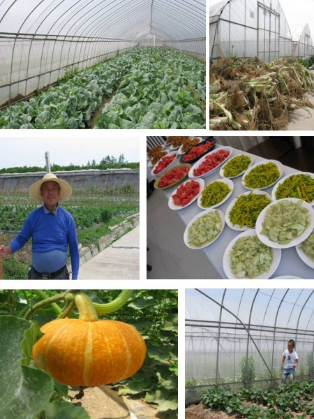 organic farm shanghai main photo
