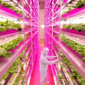 Farming of the Future at the World's Largest Indoor Farm - in Japan, where else?